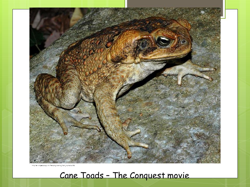 Cane Toads – The Conquest movie