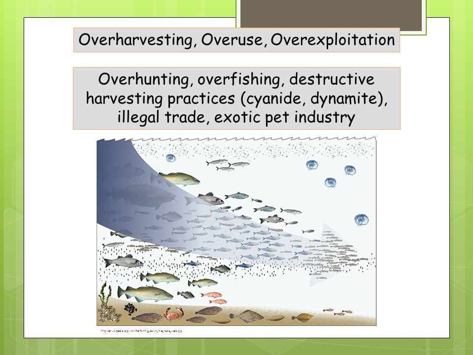 Overharvesting, Overuse, Overexploitation