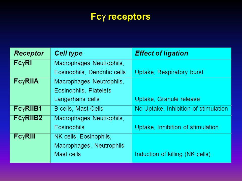 Fcg receptors Receptor Cell type Effect of ligation
