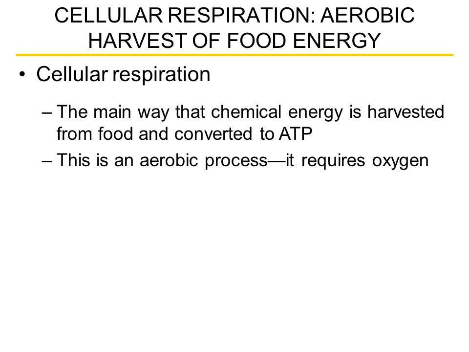 CELLULAR RESPIRATION: AEROBIC HARVEST OF FOOD ENERGY