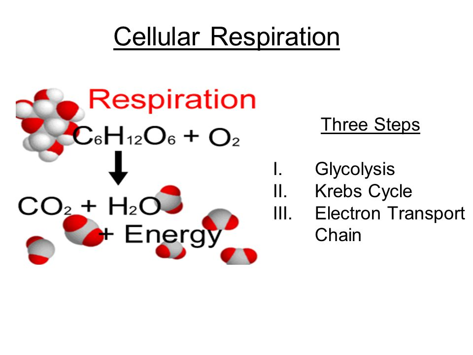 Cellular Respiration Three Steps Glycolysis Krebs Cycle