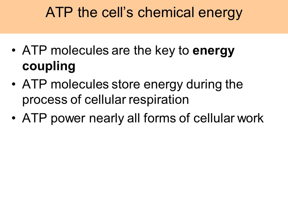 ATP the cell's chemical energy