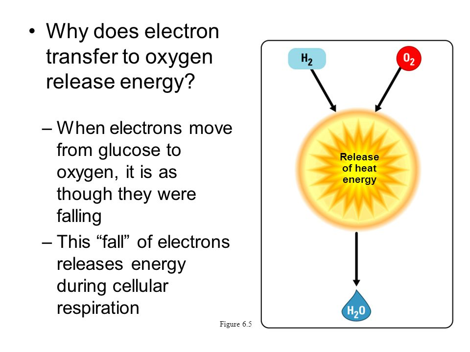 Why does electron transfer to oxygen release energy