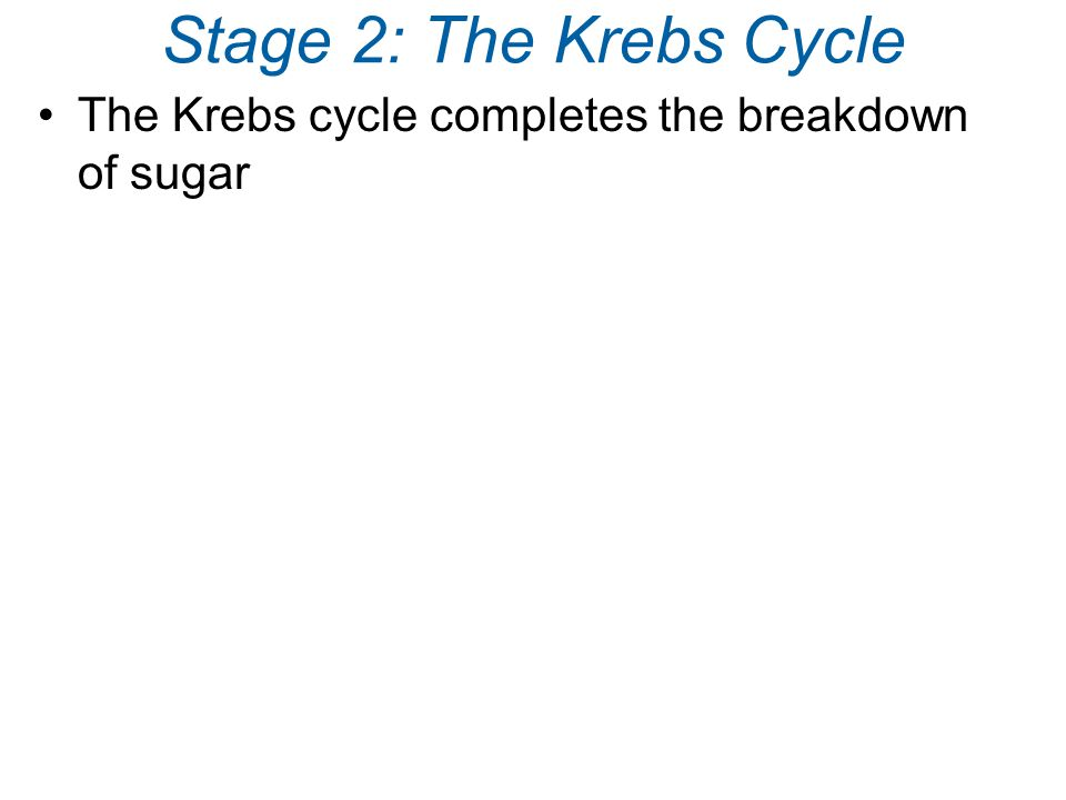 Stage 2: The Krebs Cycle The Krebs cycle completes the breakdown of sugar