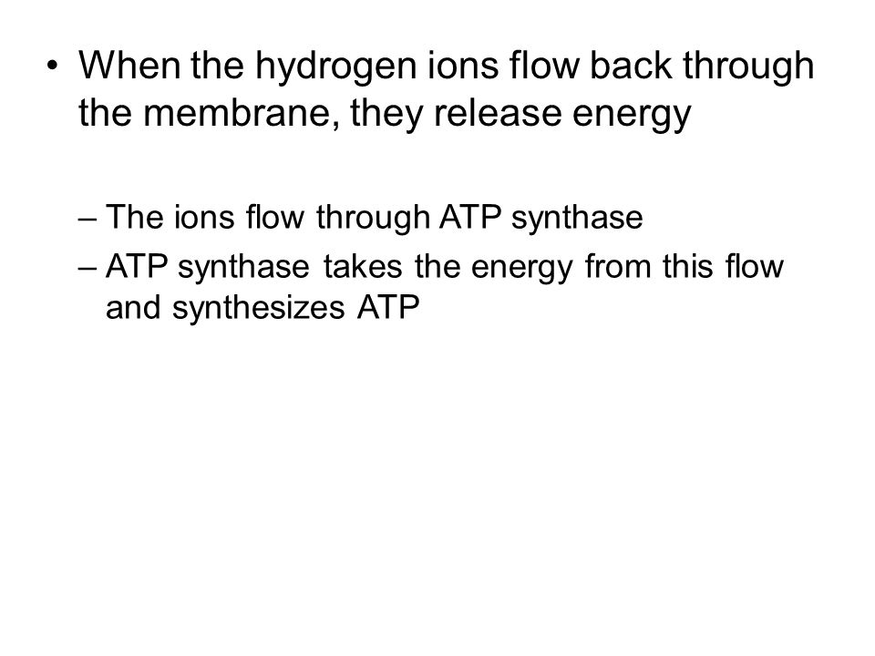 When the hydrogen ions flow back through the membrane, they release energy