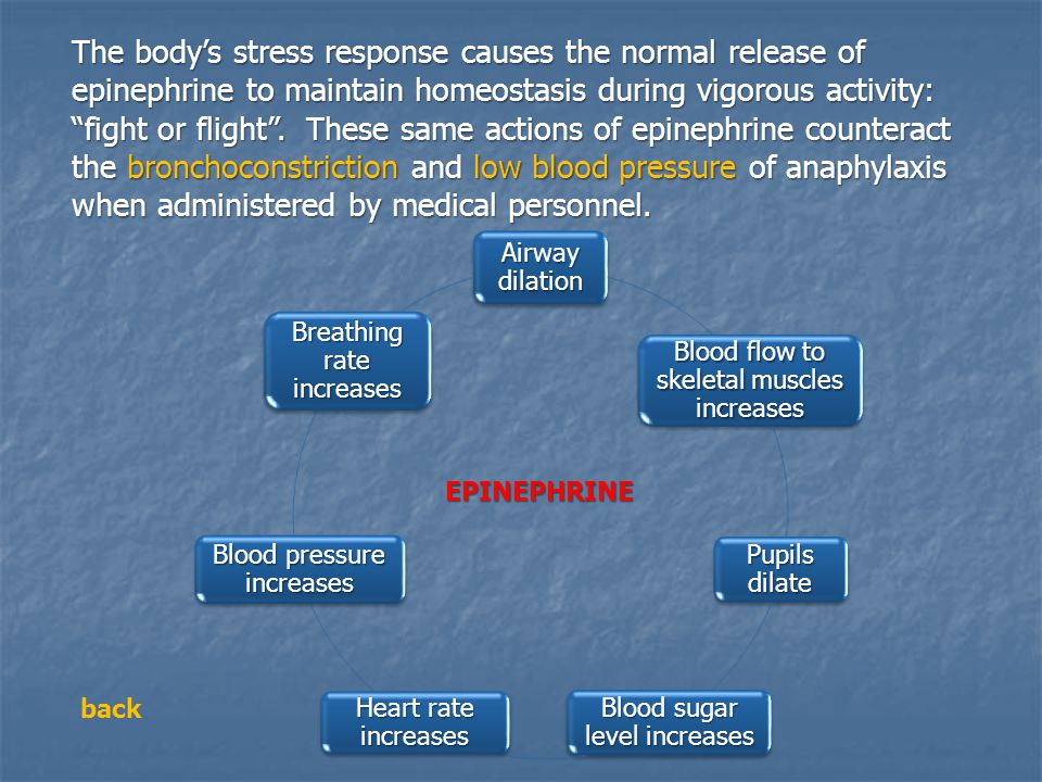 The body's stress response causes the normal release of epinephrine to maintain homeostasis during vigorous activity: fight or flight . These same actions of epinephrine counteract the bronchoconstriction and low blood pressure of anaphylaxis when administered by medical personnel.