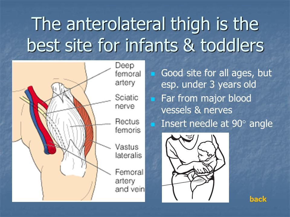 The anterolateral thigh is the best site for infants & toddlers