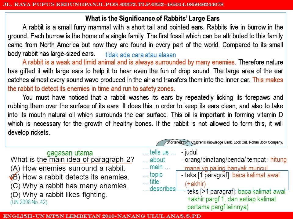  gagasan utama What is the Significance of Rabbits' Large Ears