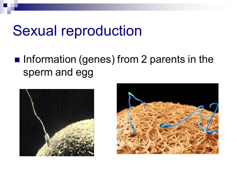 Sexual reproduction Information (genes) from 2 parents in the sperm and egg