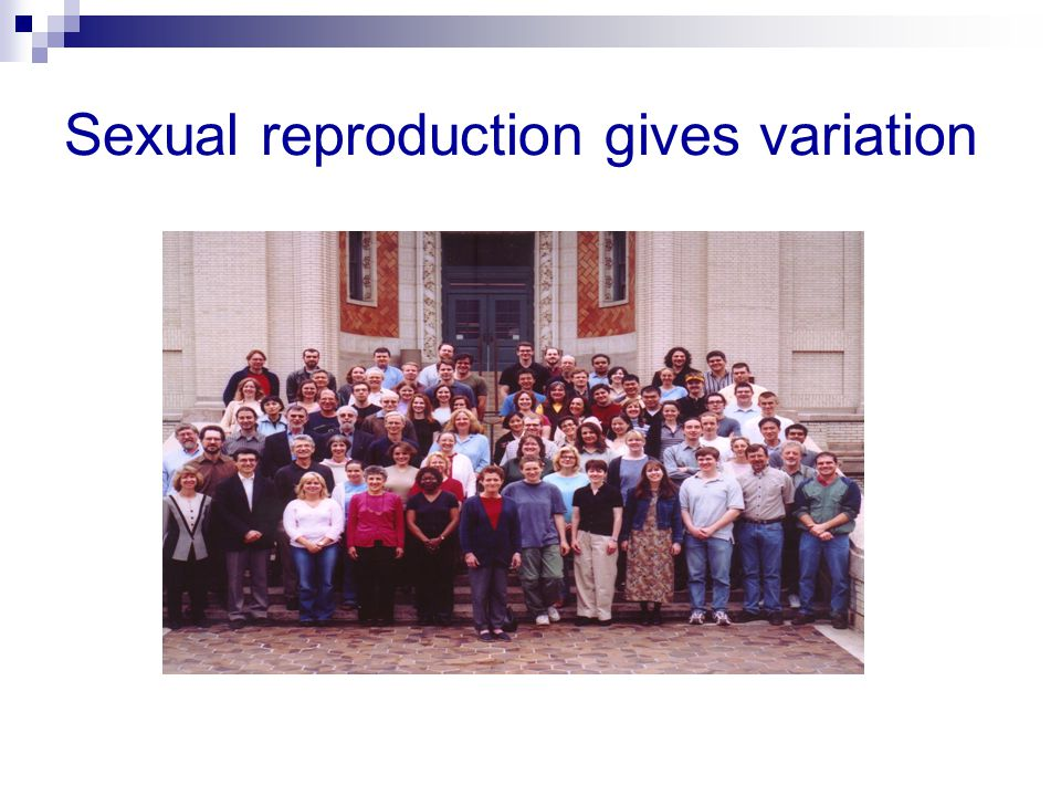 Sexual reproduction gives variation