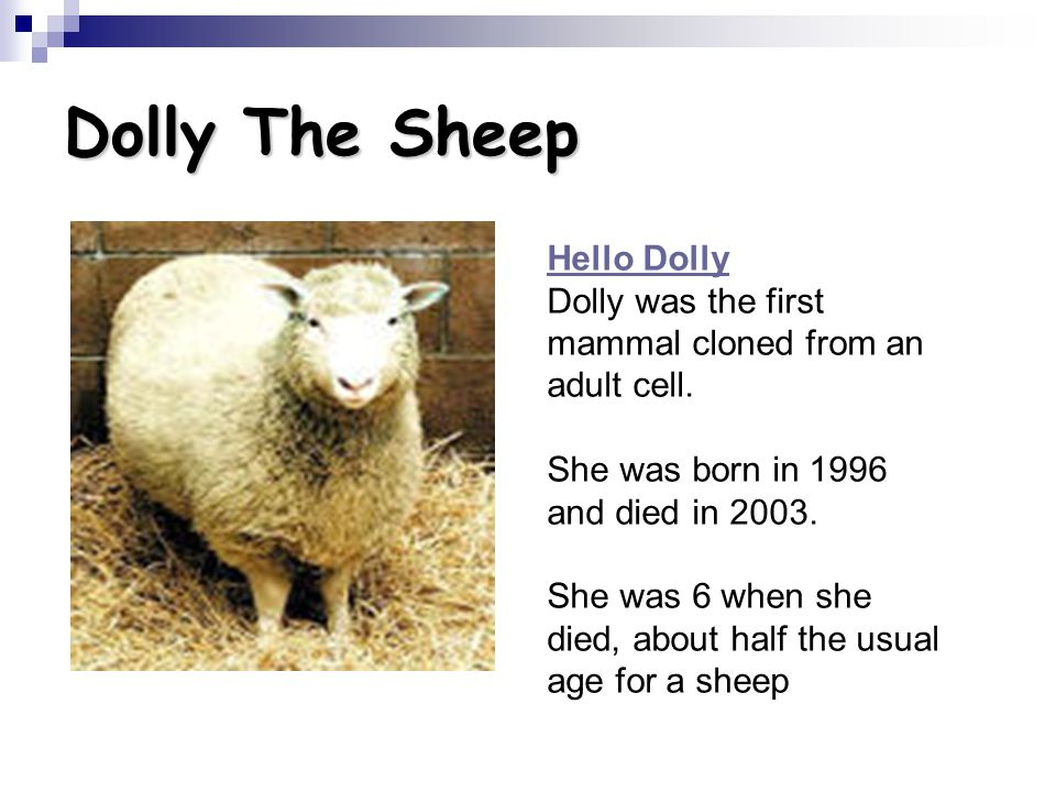 Dolly The Sheep Hello Dolly Dolly was the first mammal cloned from an adult cell. She was born in 1996 and died in 2003.