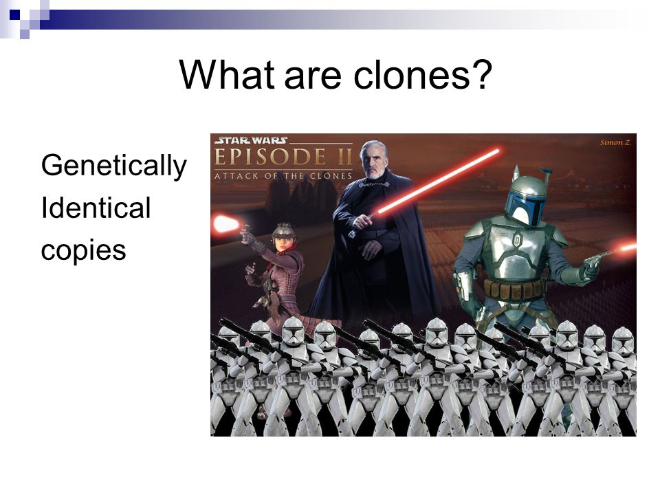 What are clones Genetically Identical copies