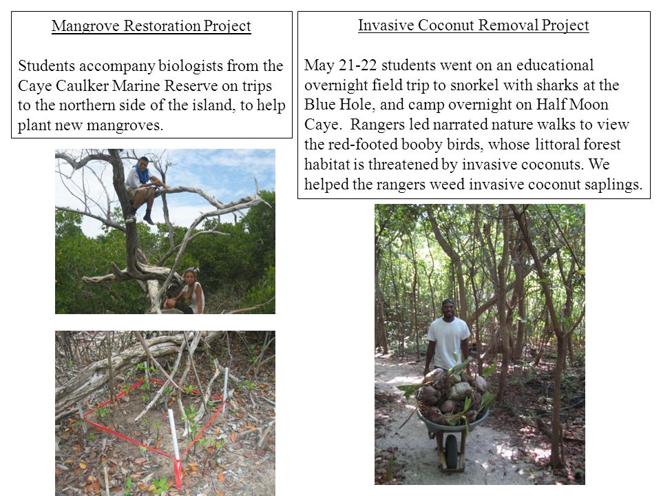 Mangrove Restoration Project