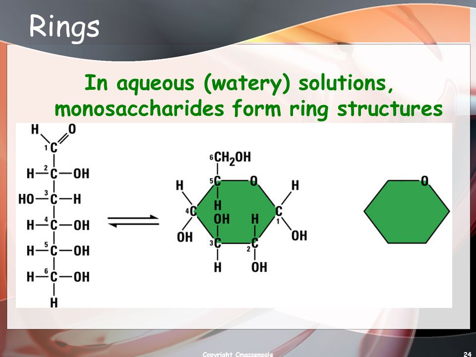 Rings In aqueous (watery) solutions, monosaccharides form ring structures Copyright Cmassengale