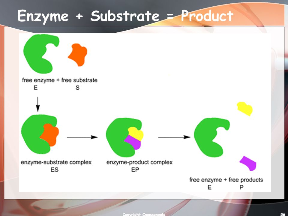 Enzyme + Substrate = Product