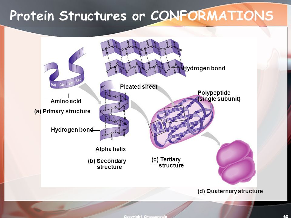 Protein Structures or CONFORMATIONS