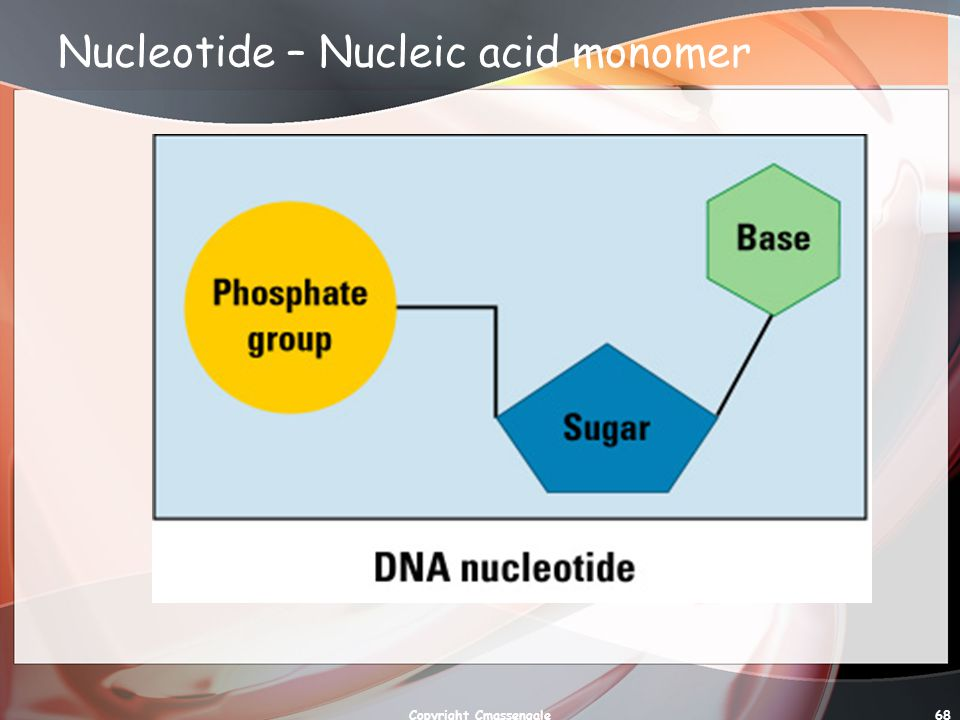 Nucleotide – Nucleic acid monomer
