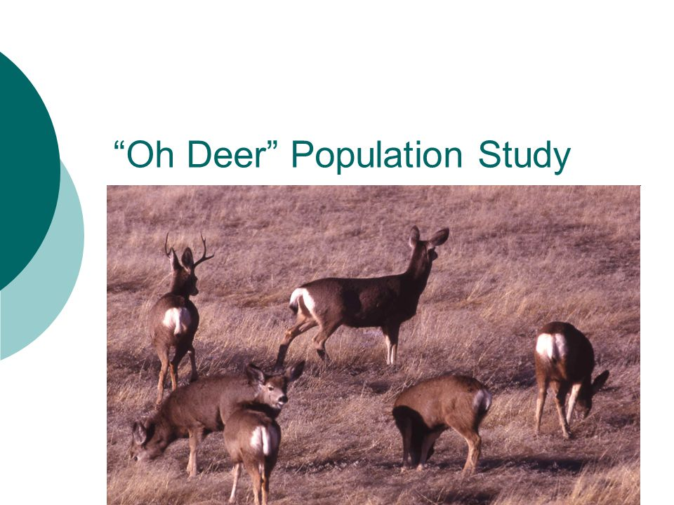 Oh Deer Population Study