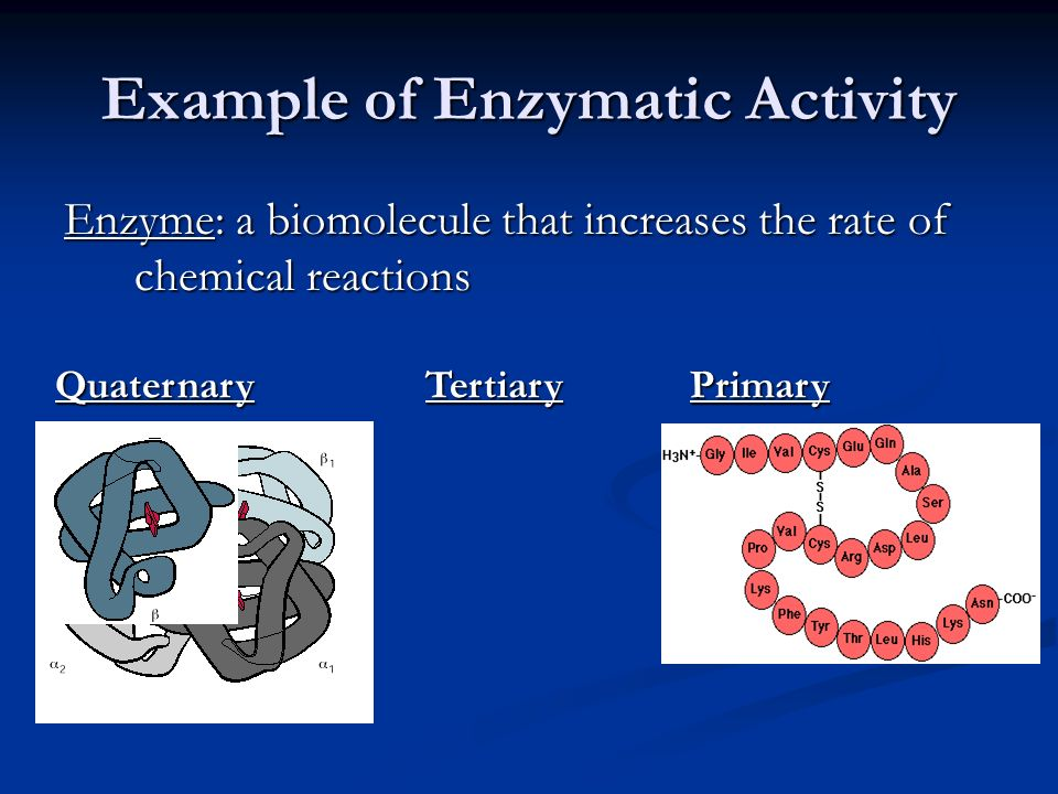 Example of Enzymatic Activity