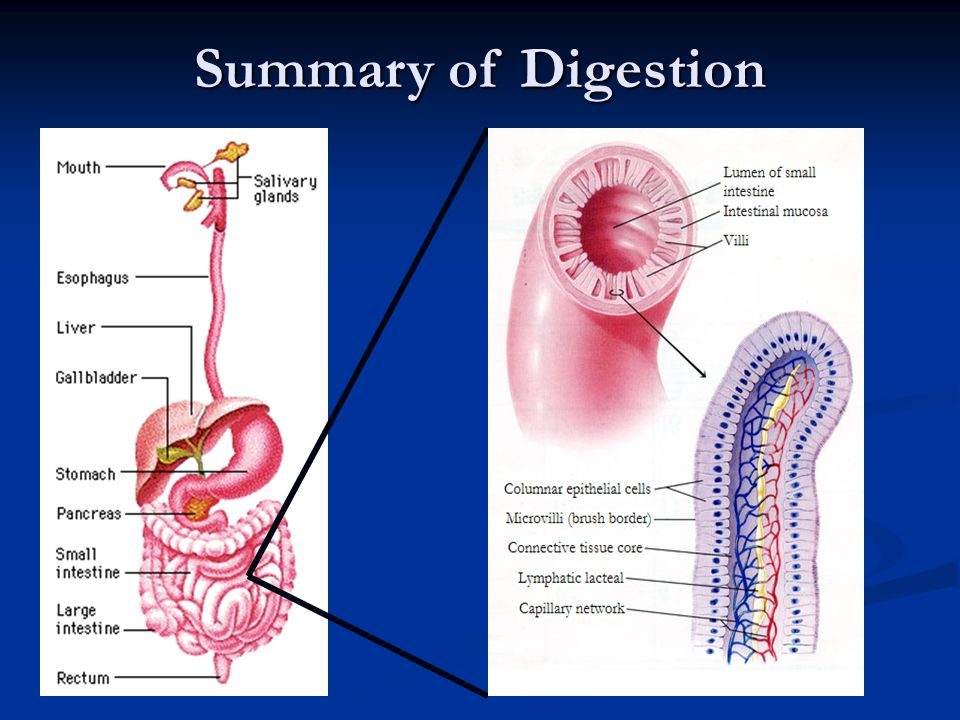Summary of Digestion