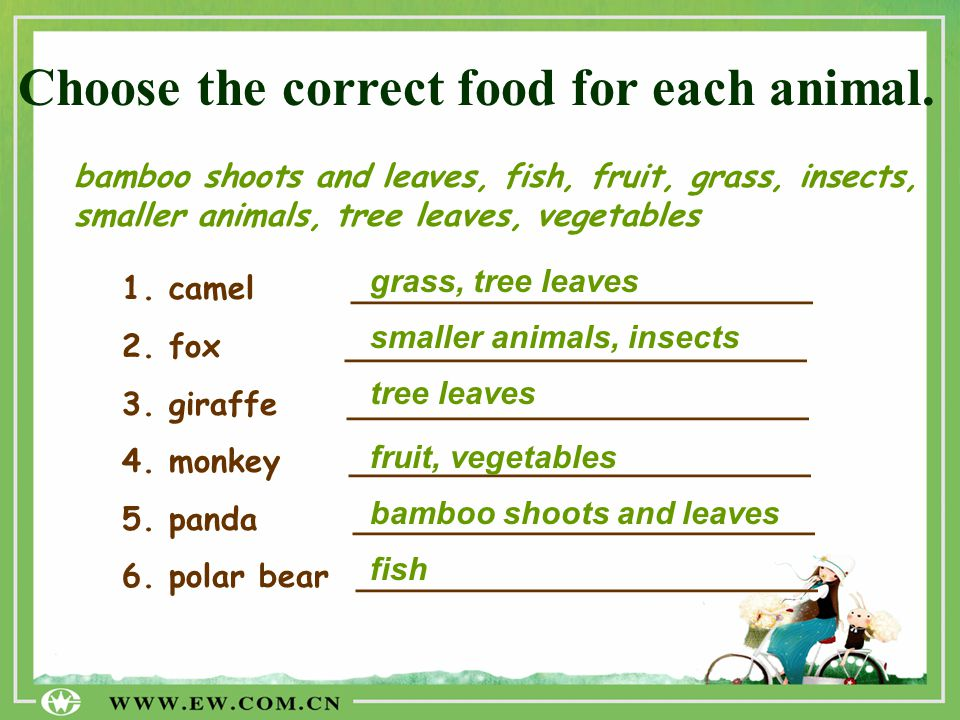 Choose the correct food for each animal.