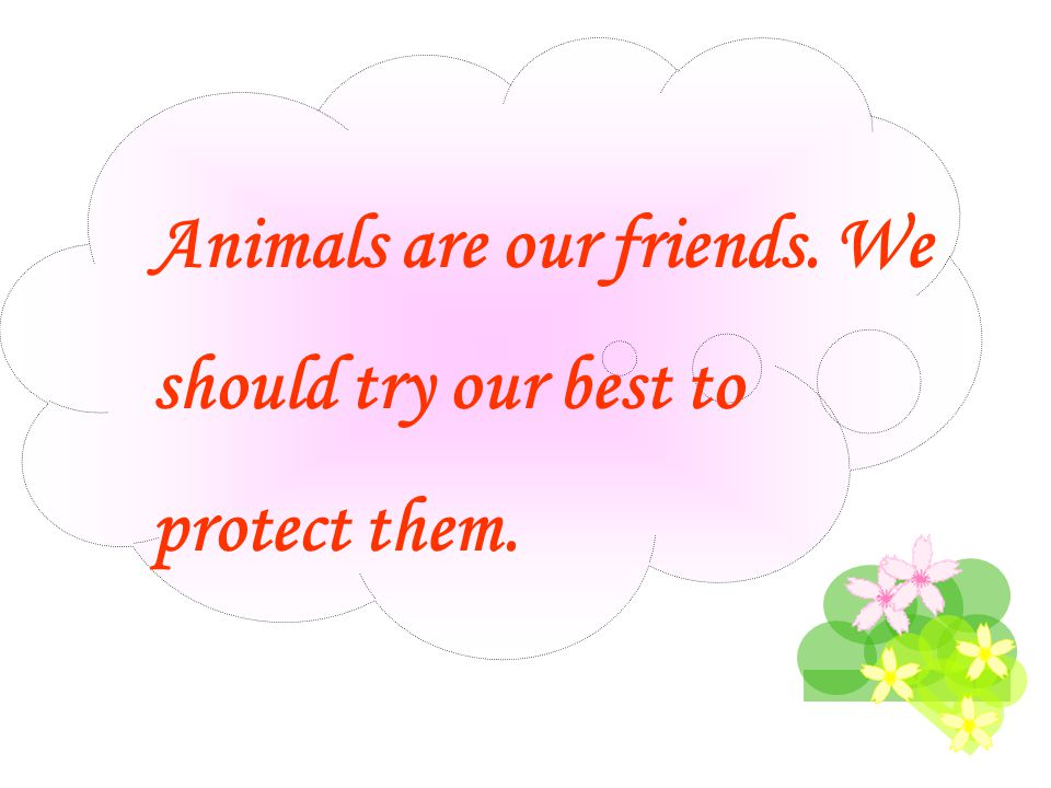 Animals are our friends. We should try our best to protect them.