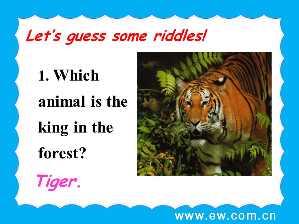Tiger. Let's guess some riddles!