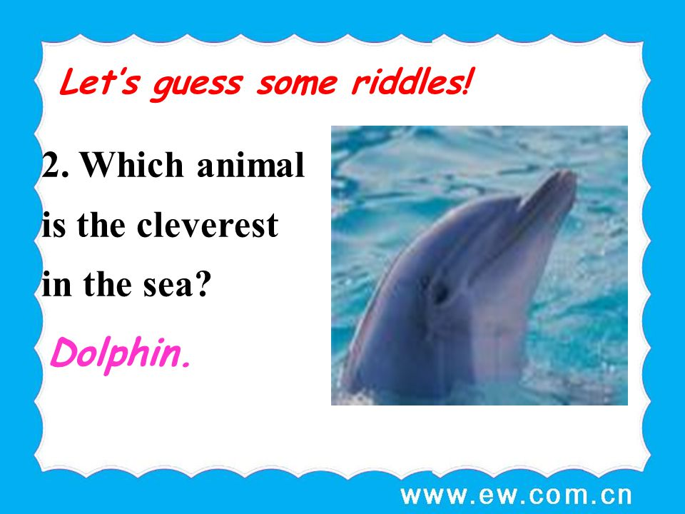 2. Which animal is the cleverest in the sea