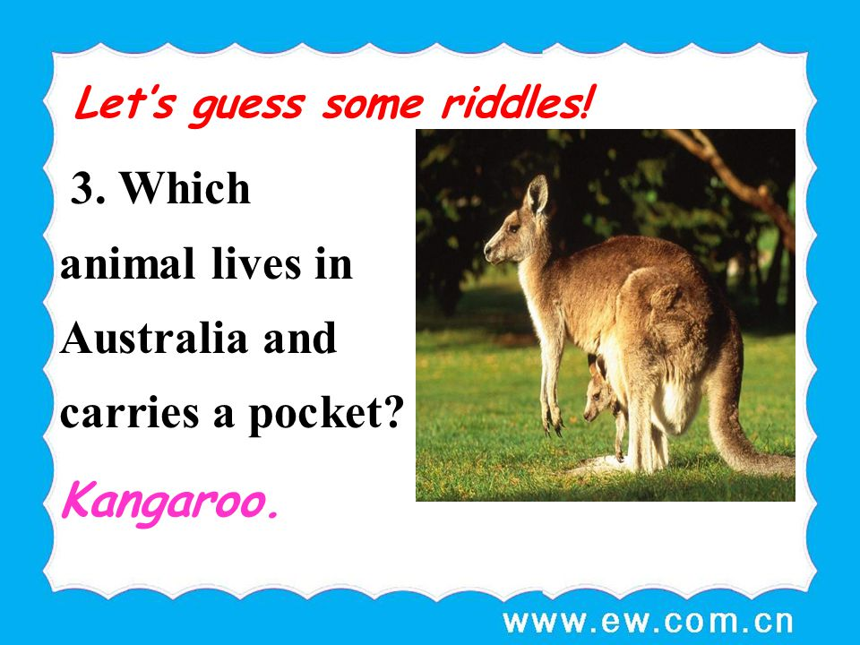 3. Which animal lives in Australia and carries a pocket