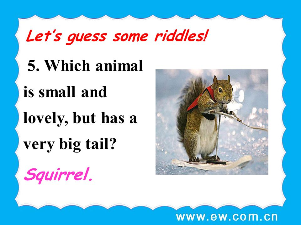5. Which animal is small and lovely, but has a very big tail