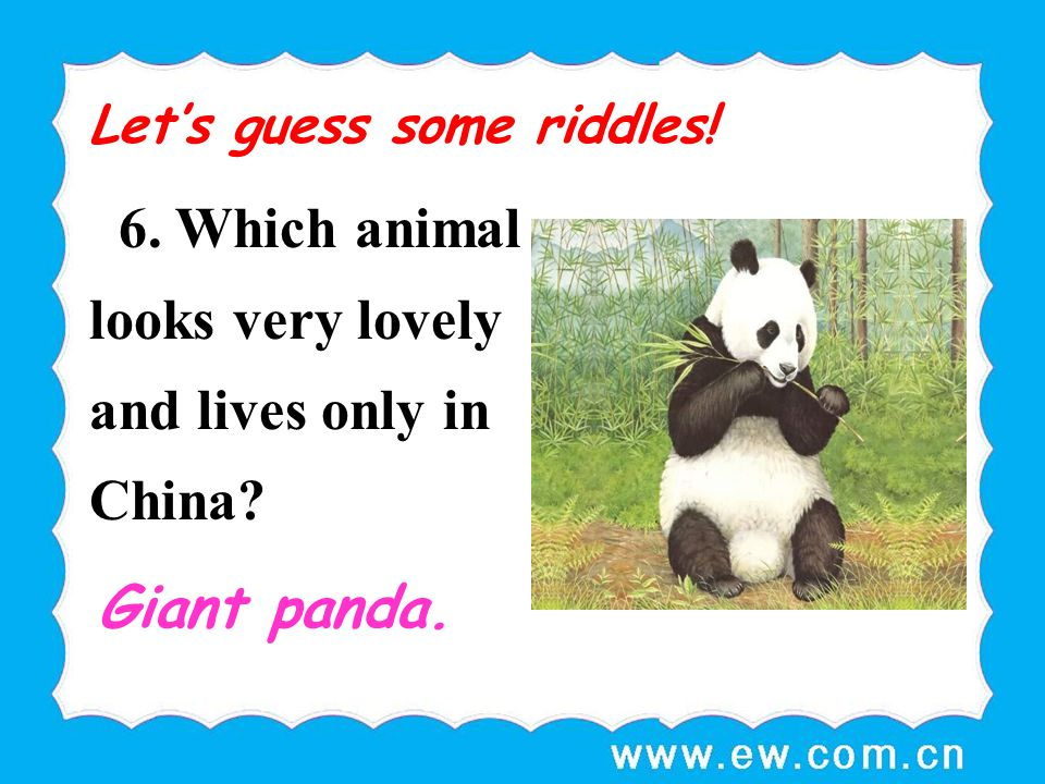 6. Which animal looks very lovely and lives only in China