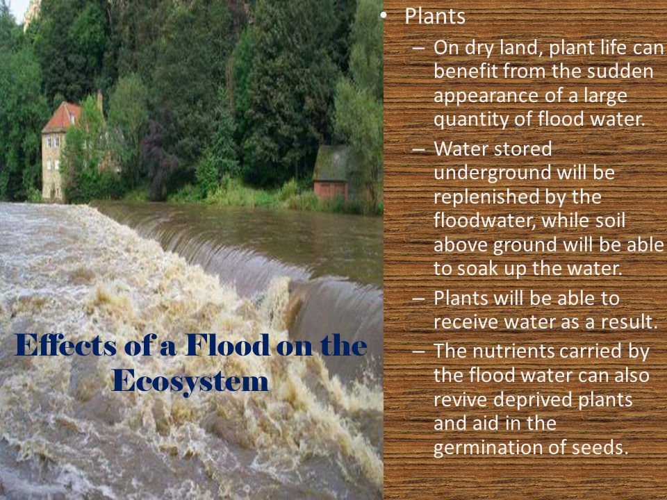 Effects of a Flood on the Ecosystem