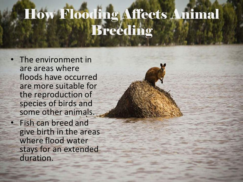How Flooding Affects Animal Breeding