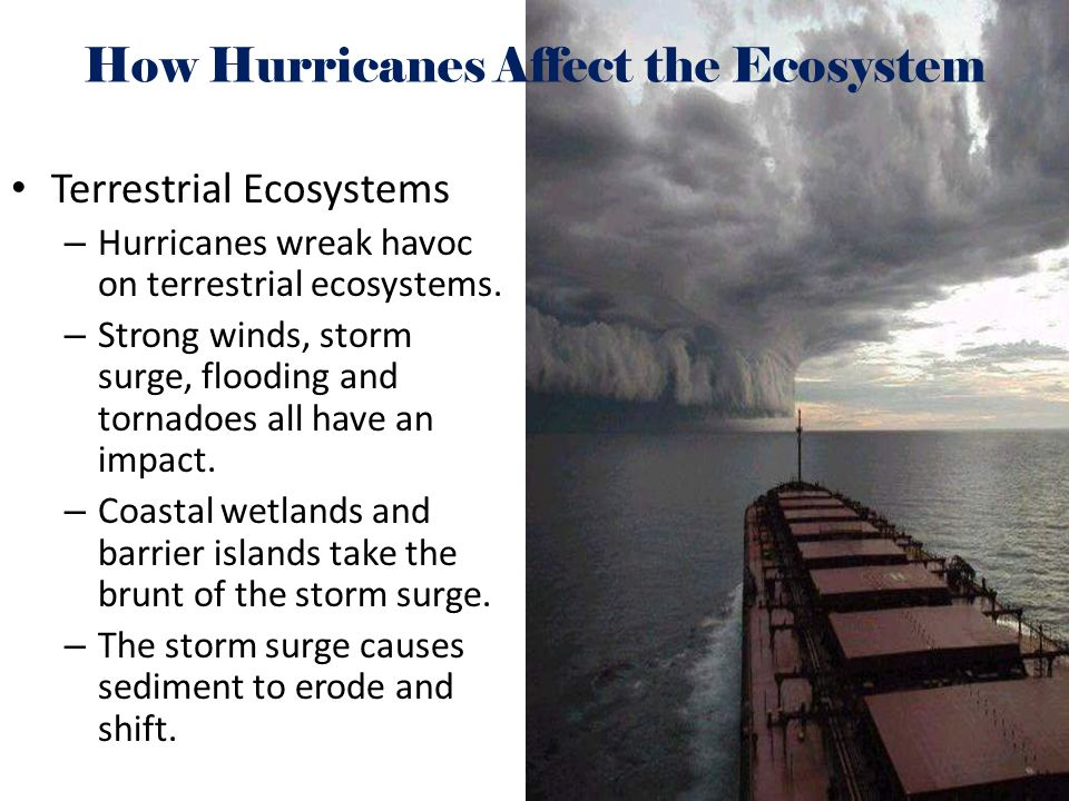 How Hurricanes Affect the Ecosystem