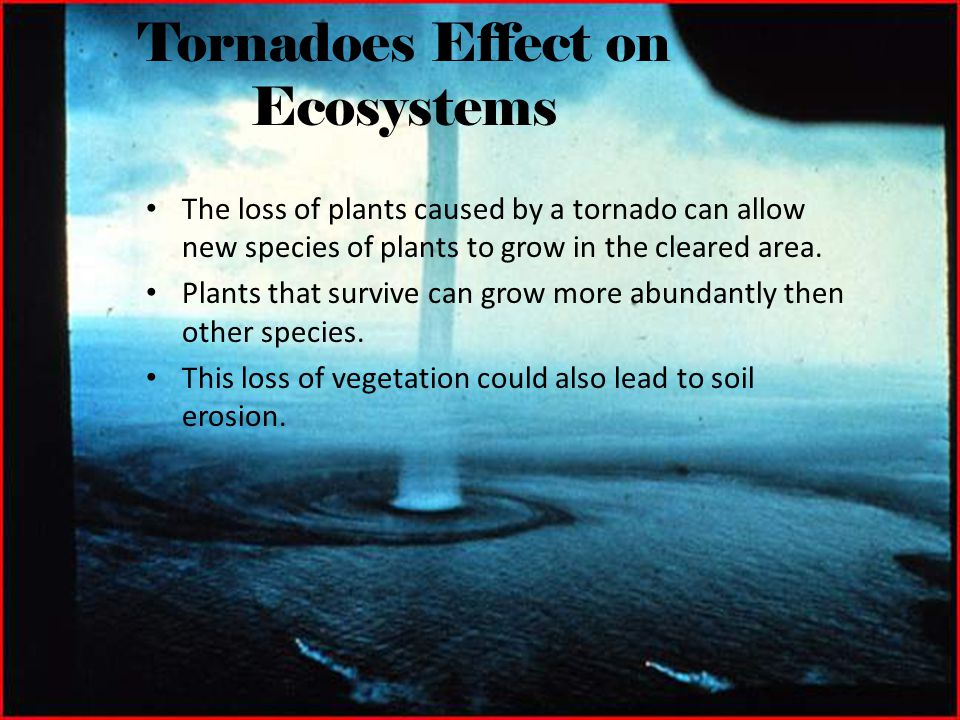 Tornadoes Effect on Ecosystems
