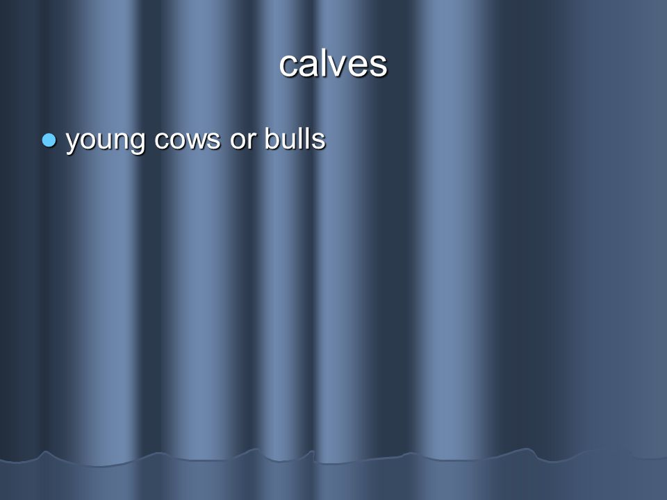 calves young cows or bulls