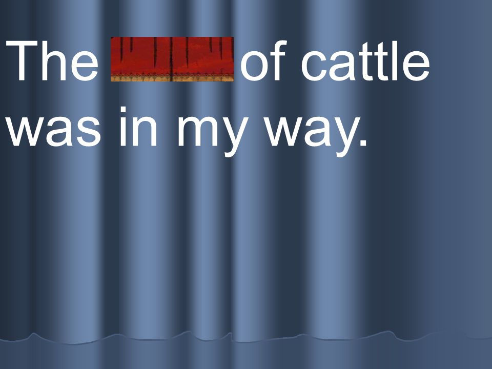 The herd of cattle was in my way.