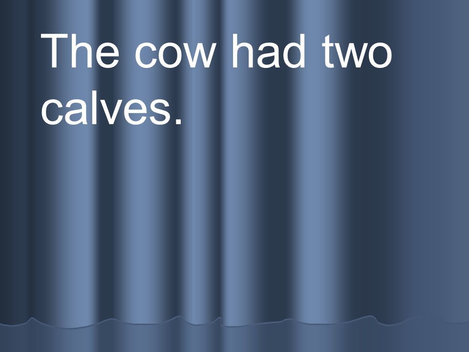 The cow had two calves.