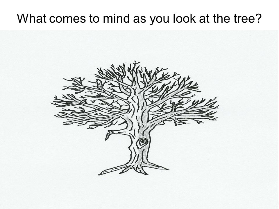 What comes to mind as you look at the tree