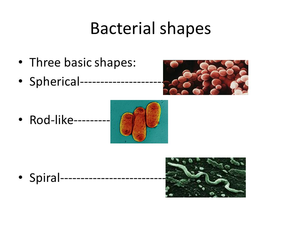 Bacterial shapes Three basic shapes: Spherical---------------------