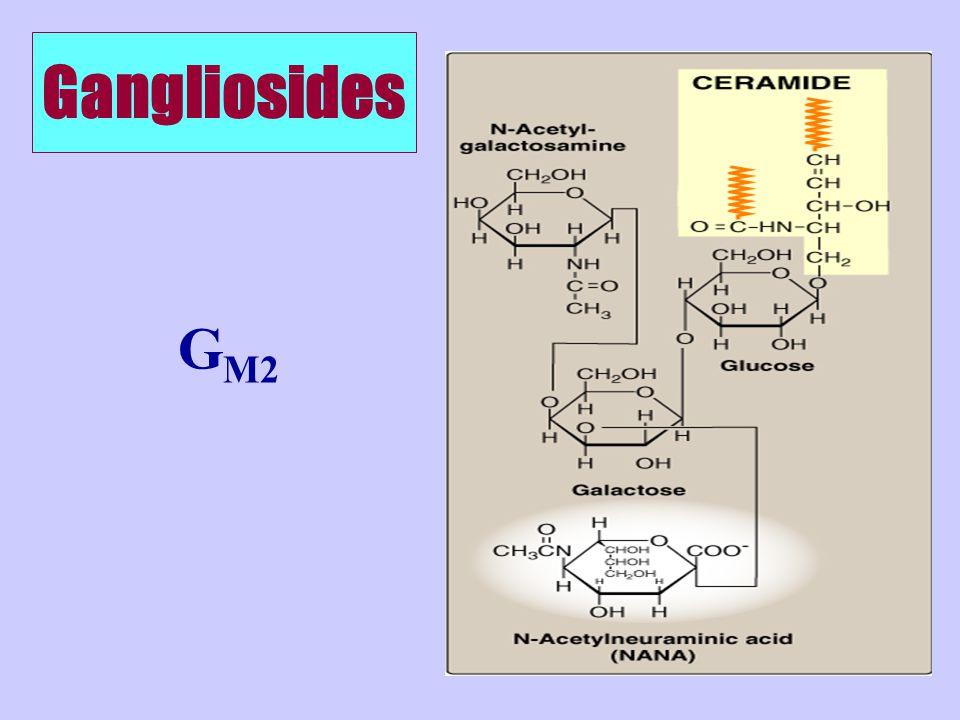 Gangliosides GM2
