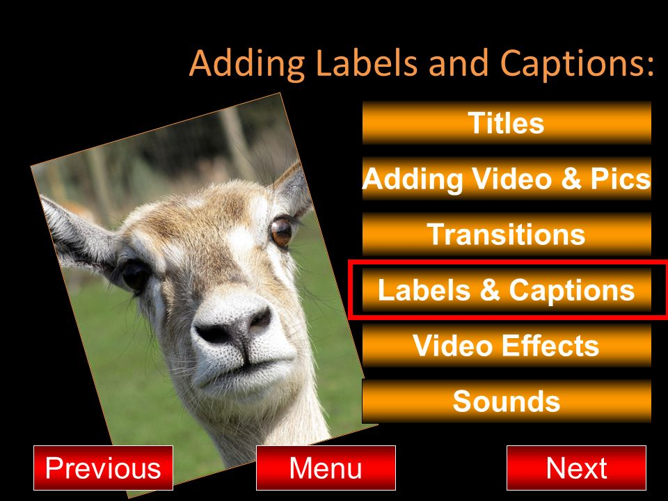Adding Labels and Captions: