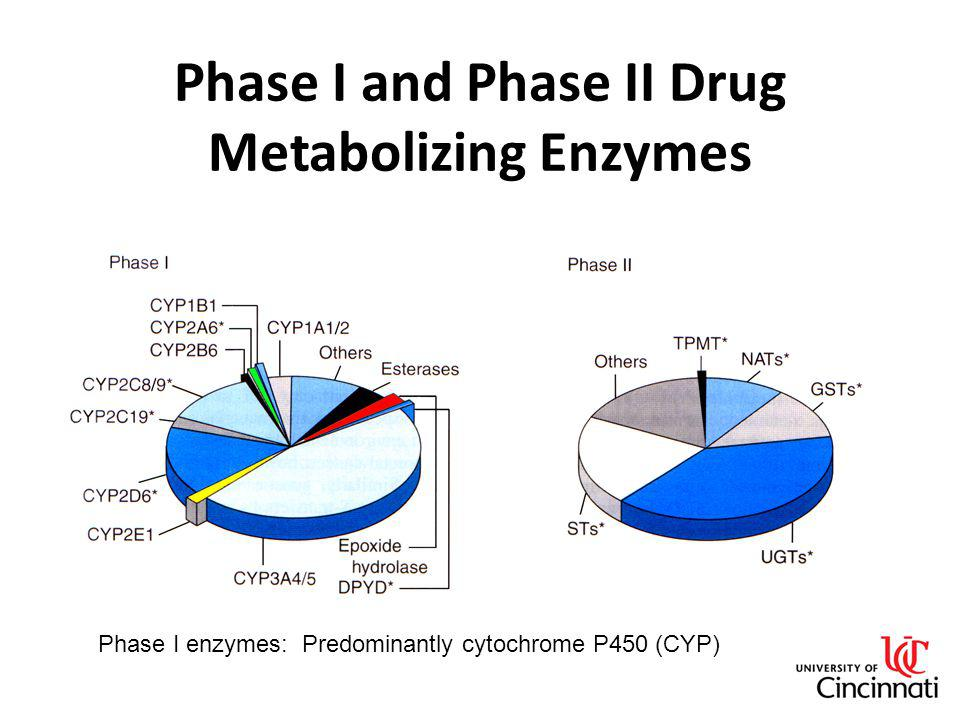 Phase I and Phase II Drug Metabolizing Enzymes