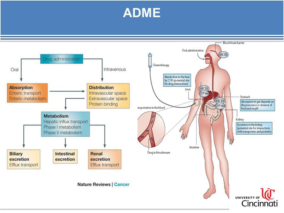 ADME ISSUES IN ANTIssues I-CANCER DRUG DEVELOPMENT