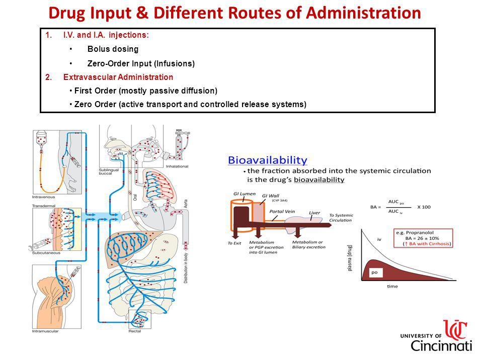 Drug Input & Different Routes of Administration