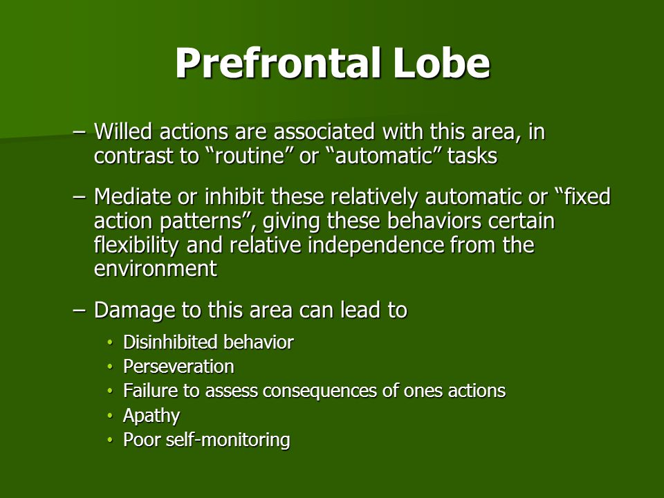 Prefrontal Lobe Willed actions are associated with this area, in contrast to routine or automatic tasks.