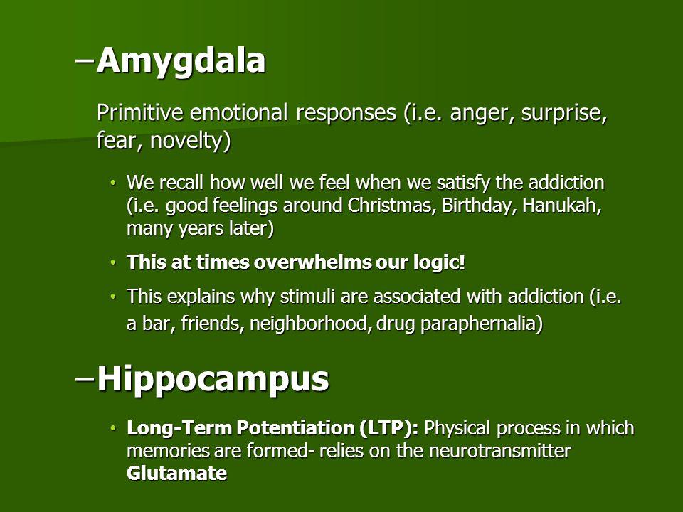 Amygdala Primitive emotional responses (i.e. anger, surprise, fear, novelty)