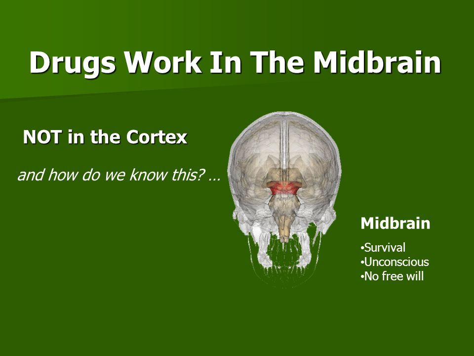 Drugs Work In The Midbrain