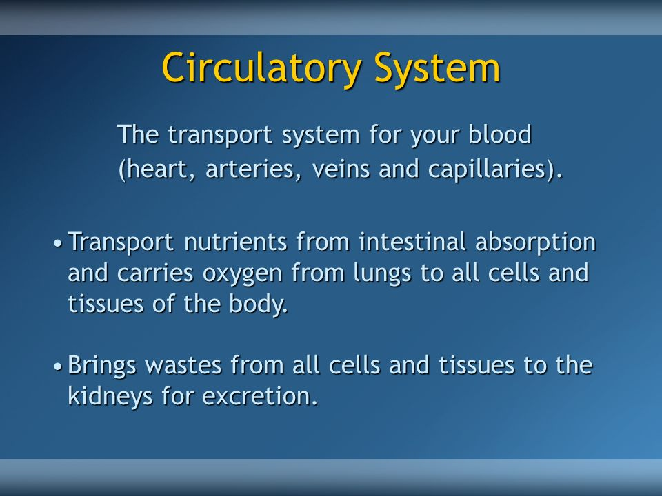 Circulatory System The transport system for your blood (heart, arteries, veins and capillaries).