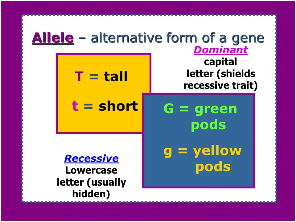 Allele – alternative form of a gene